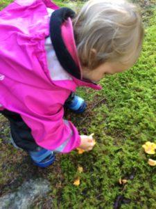 Att plocka svamp är spännande för både stora och små!